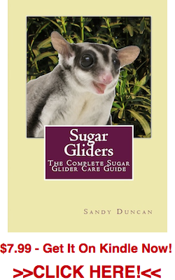 Sugar Gliders Kindle Book