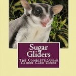 Sugar Glider Book – Advice From Experienced Sugar Glider Owners